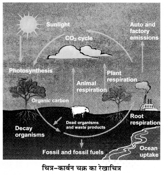 UP Board Solutions for Class 12 Biology Chapter 14 Ecosystem 2Q.6