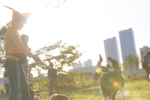アトリエイエネコ Cat Photographer 45470030631_ac999ba2e5 1日1ワン!安満人倶楽部(あまんどクラブ)10/21わんこと一緒にクリーンキャンペーンに行ってきた! 1日1猫!  高槻 犬 安満人倶楽部 子猫 大阪 写真 保護猫 保護犬 スマホ Kitten dog Cute cat