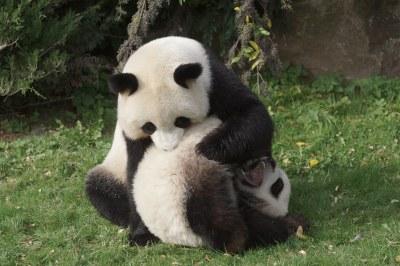 1-year-old Yuan Meng and mom Huan Huan 2018-10-16