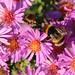 Perfect purple pollination