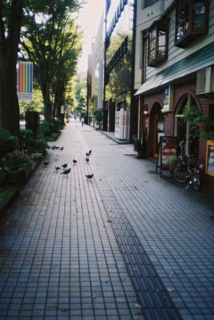 Kanazawa Pigeons
