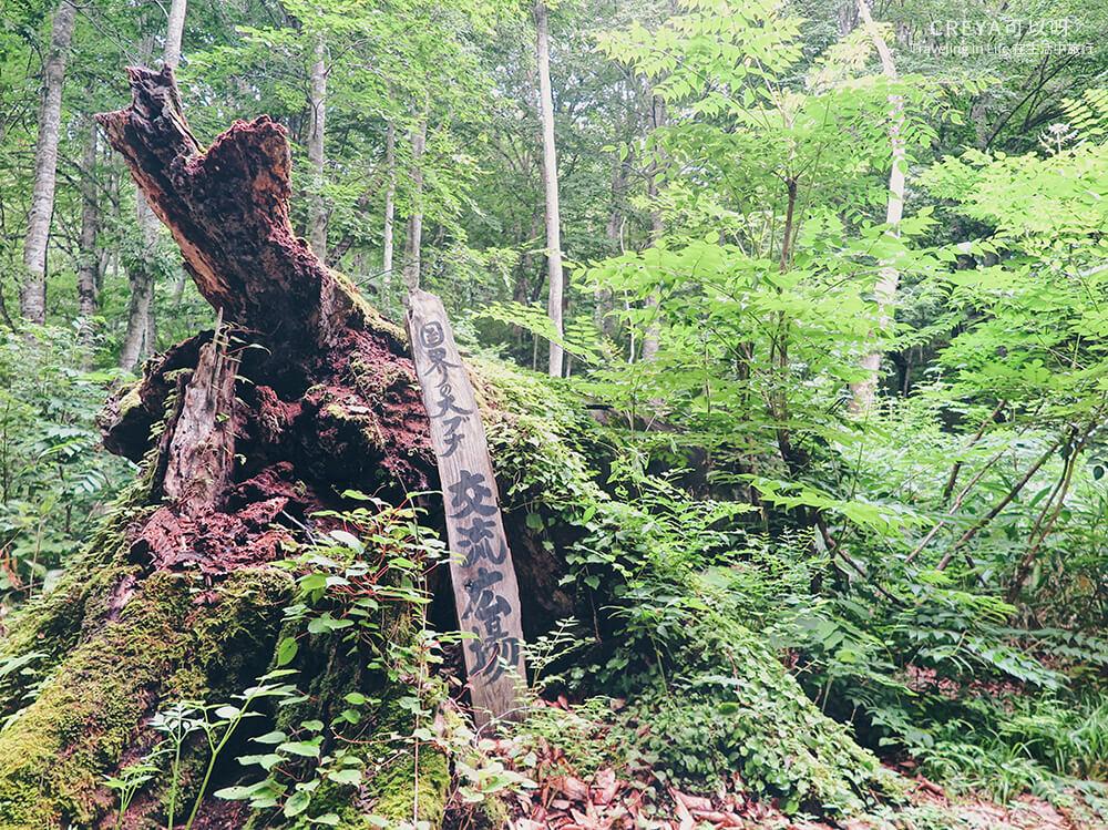 20181018 | 行走在日本東北 | 治癒之森的一堂生命課程,健行在自然首都的福島只見町 08.jpg