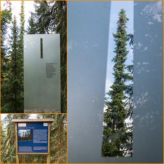 Schlanke Bäume
