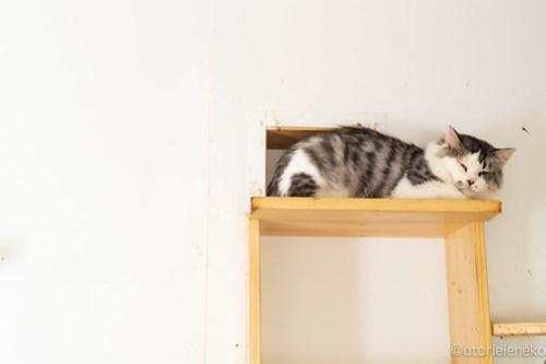 アトリエイエネコ Cat Photographer 43073930220_c281600020 1日1猫!高槻ねこのおうち めちゃ顔がタイプですのプーニャンくん♪ 1日1猫!  高槻ねこのおうち 猫写真 猫カフェ 猫 子猫 大阪 初心者 写真 保護猫カフェ 保護猫 ニャンとぴあ スマホ カメラ Kitten Cute cat