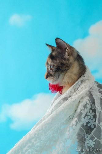 アトリエイエネコ Cat Photographer 30673419917_f360f897fe 1日1猫!高槻ねこのおうち 里活中のとよちゃん♫ 1日1猫!  黒猫 高槻ねこのおうち 里親様募集中 里親募集 猫写真 猫カフェ 猫 子猫 大阪 写真 保護猫カフェ 保護猫 スマホ サビ猫 カメラ おおさかねこ倶楽部 Kitten Cute cat