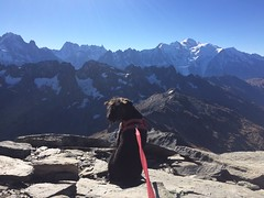 Mountain pup