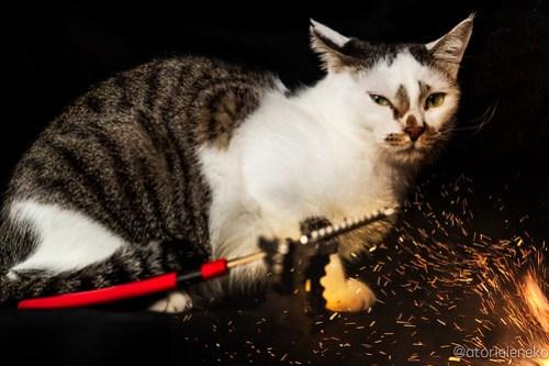 アトリエイエネコ Cat Photographer 45290733671_225a62f675 1日1猫!ニャンとぴあ 劇画タラちゃん&キュートタラちゃん♫ 1日1猫!  里親様募集中 猫写真 猫カフェ 猫 子猫 大阪 初心者 写真 保護猫カフェ 保護猫 ニャンとぴあ スマホ カメラ おおさかねこ倶楽部 Kitten Cute cat