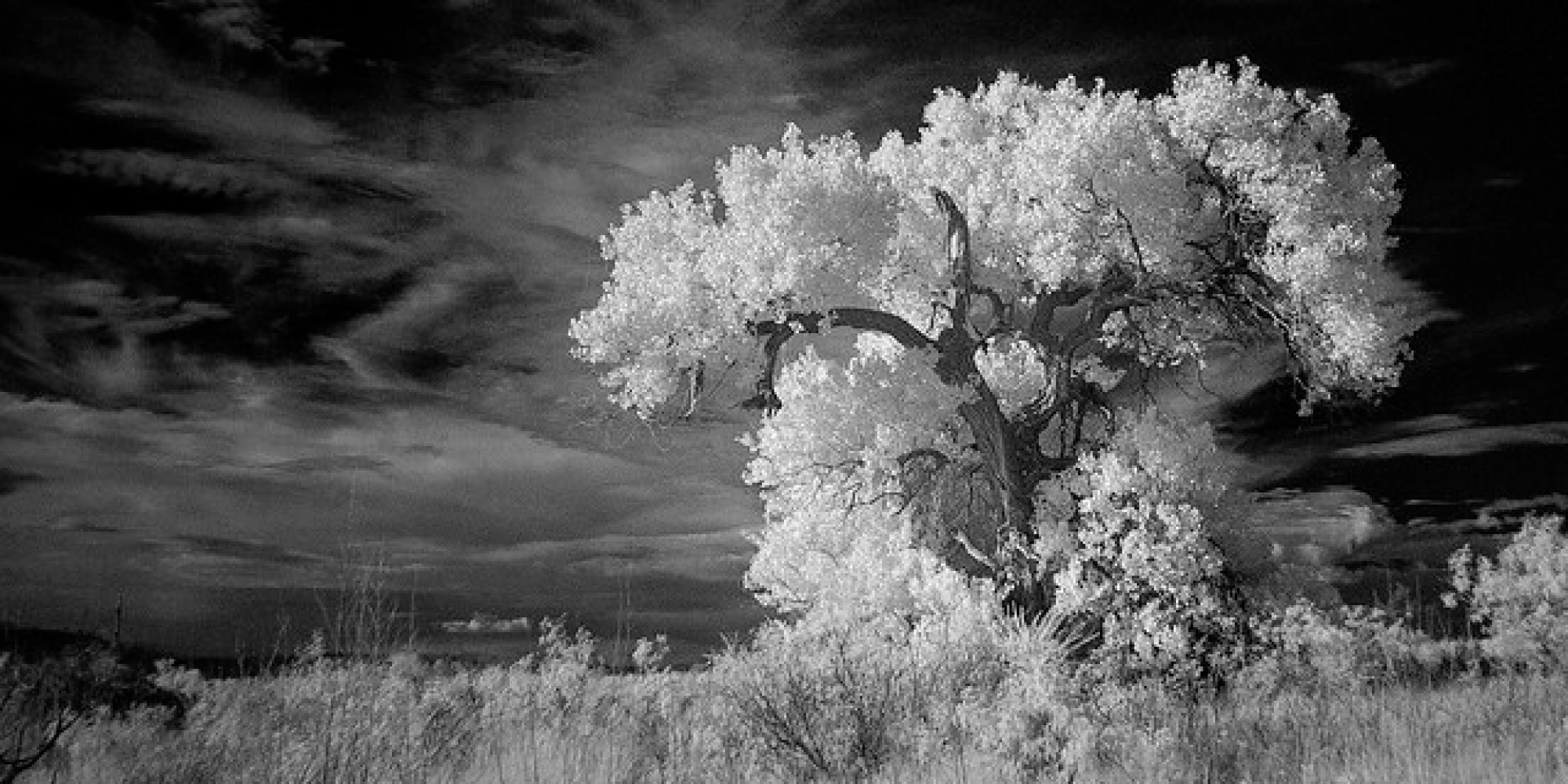 Cottonwood IR__DSCN0794