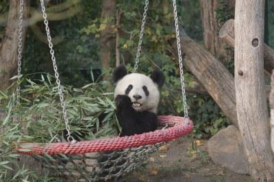 2-year-old cub at Tiergarten Schönbrunn 2018-10-20