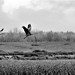 Flight -- Sauvie Island, Oregon