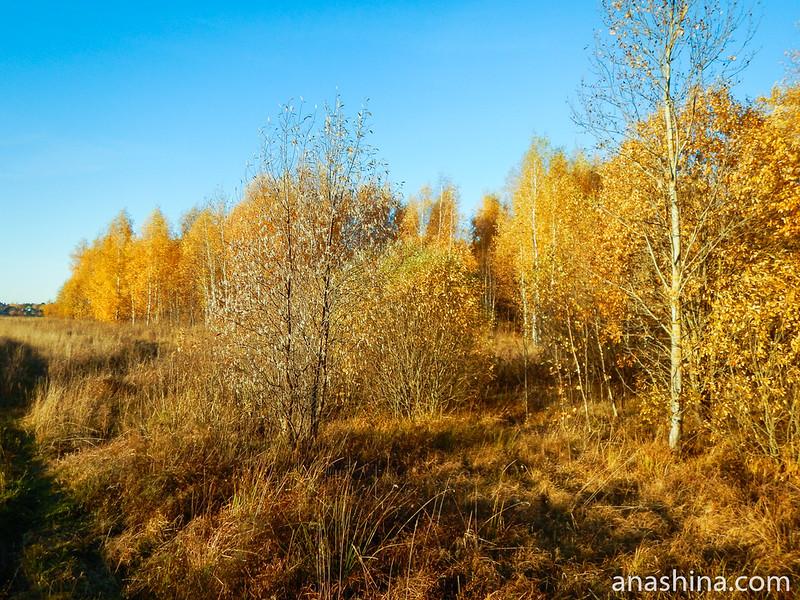 Молодой лес, Московская область