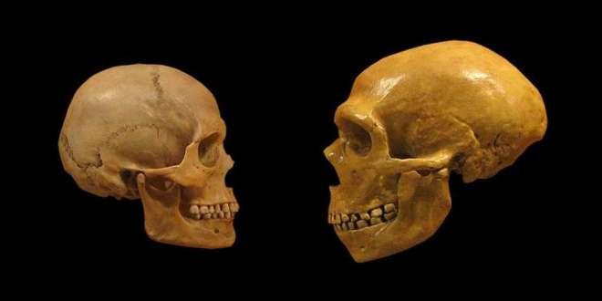 des-dents-anciennes-révèlent-de-nouveaux-chapitres-sur-notre-évolution