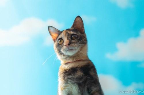 アトリエイエネコ Cat Photographer 45563830122_1dce24220e 1日1猫!高槻ねこのおうち 里活中のとよちゃん♫ 1日1猫!  黒猫 高槻ねこのおうち 里親様募集中 里親募集 猫写真 猫カフェ 猫 子猫 大阪 写真 保護猫カフェ 保護猫 スマホ サビ猫 カメラ おおさかねこ倶楽部 Kitten Cute cat