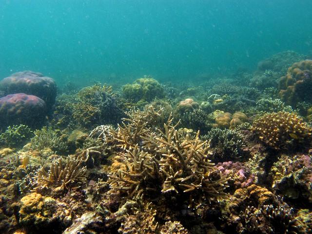 Coral reef at Bisaya-Bisaya Islet