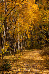 Follow the Yellow Leaf Road.