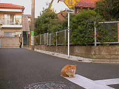 Cat sits on road