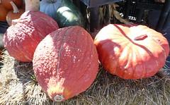 Ace Hardware Pumpkins