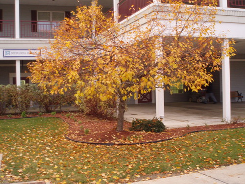 11/20/07 tree in UB, empty north campus