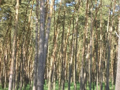 מדהימים היערות שלהם