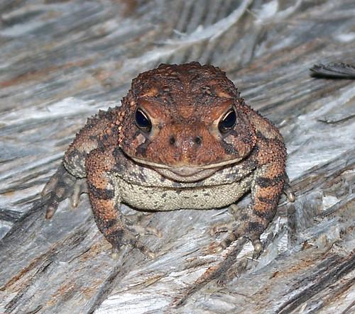 toad3.jpg