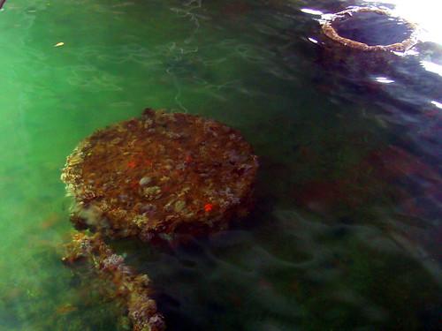 Coral Reefs cover the sunken Arizona