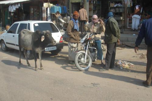 前往Jaisalmer路上1-10
