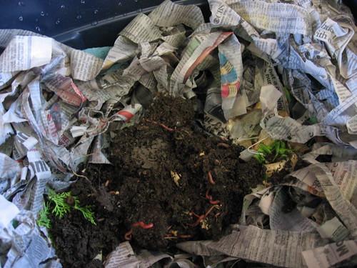 worms nesting