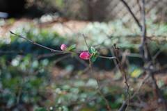 spring's first blush