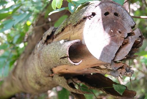 砂卡噹?道-脫皮樹幹