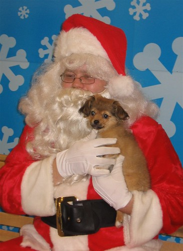 Sparky Visits Santa and First Snow 005