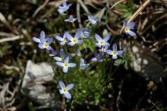 Blueits