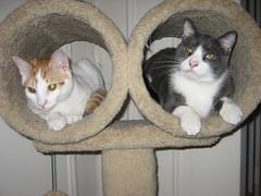 Wally & Tito