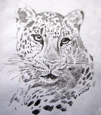 leopard sketch 301007
