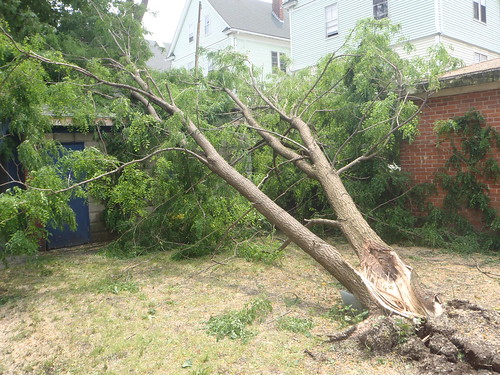 Downed tree in the backyard