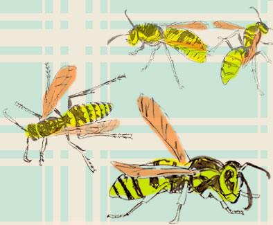 WASPs, final