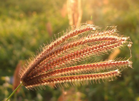 grass in the sunlight madivala lake 241107