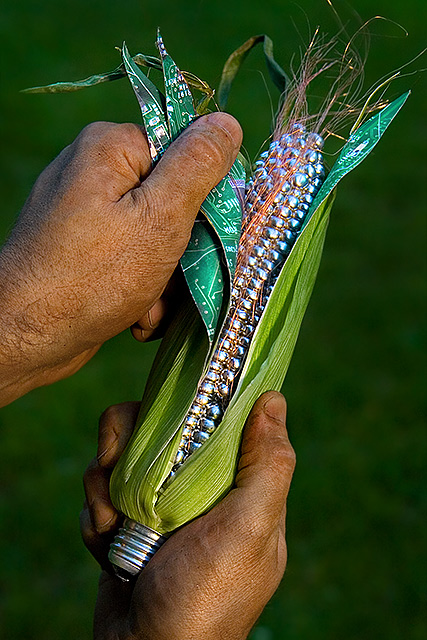 креатив царевица генно модифициране