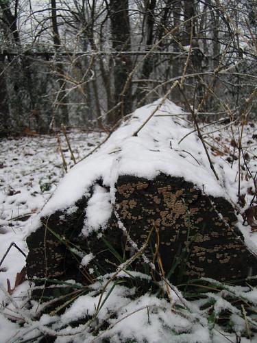snow on a log in my backyard