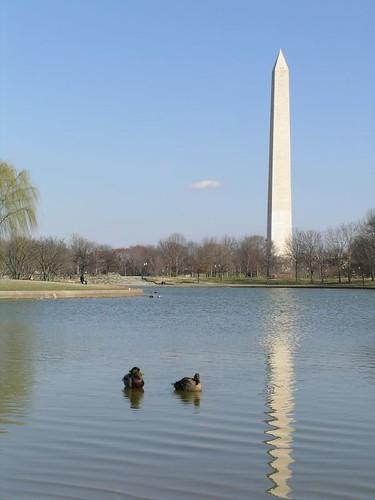 Washington Monument reflected with ducks