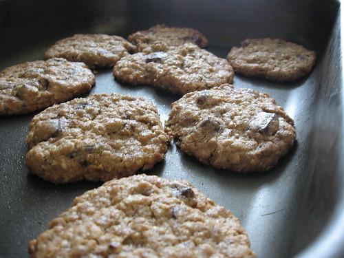 peanut butter oatmeal chocolate chunkers