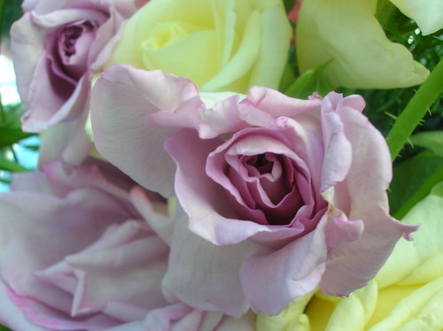 Rosas caseras 3