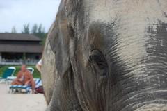 Elephant's Eye View
