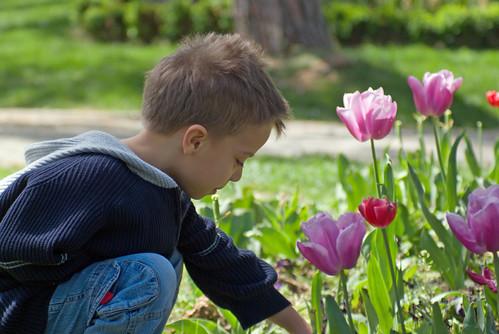 tulip season, istanbul, pentax k10d