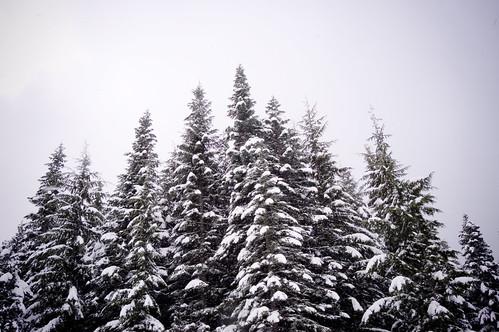 snowplay_46