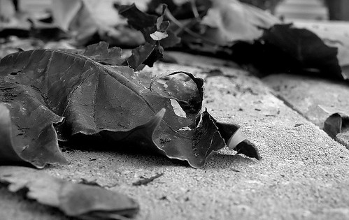 dead leaves and the dirty ground 11/2