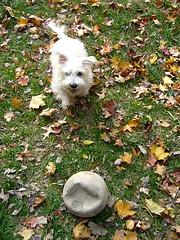 Karney and his ball