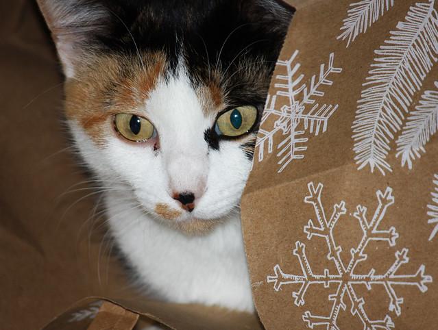Cat's in the Bag!