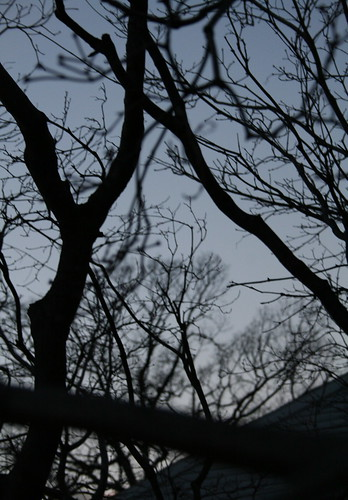 Many Branches
