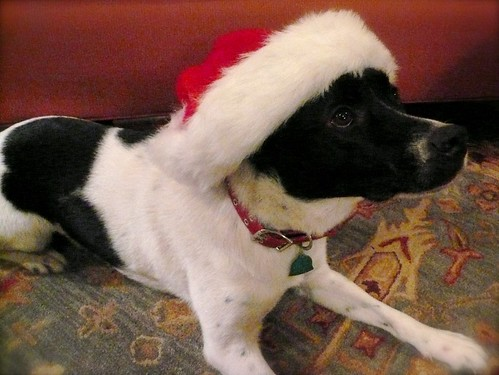 Cliche Pet with Santa Hat Photo