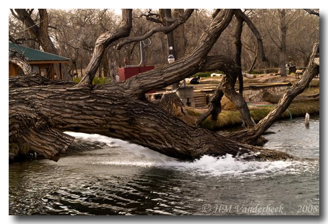 A Tree at Shady Lakes